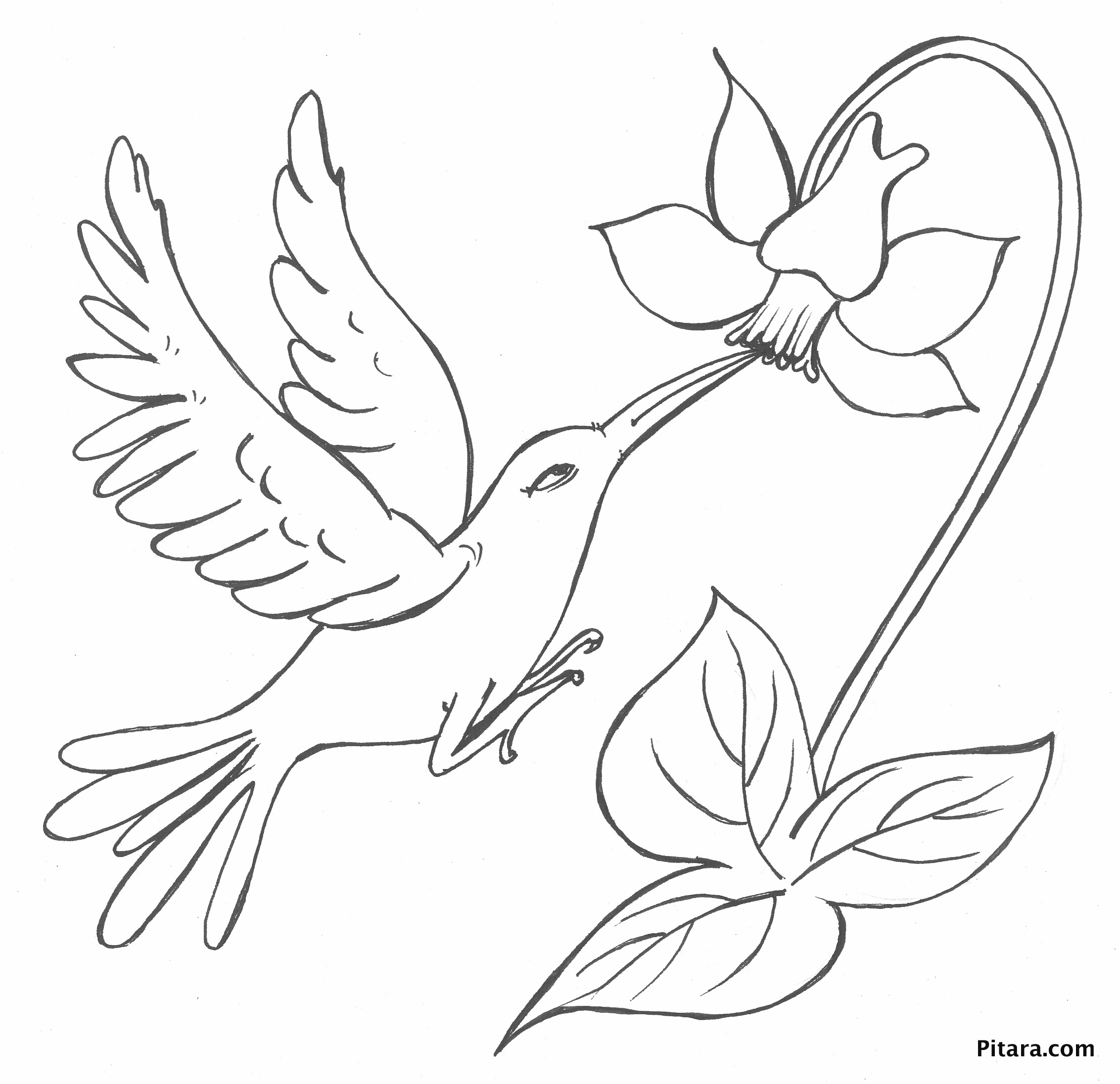 Bird with flower – Coloring page