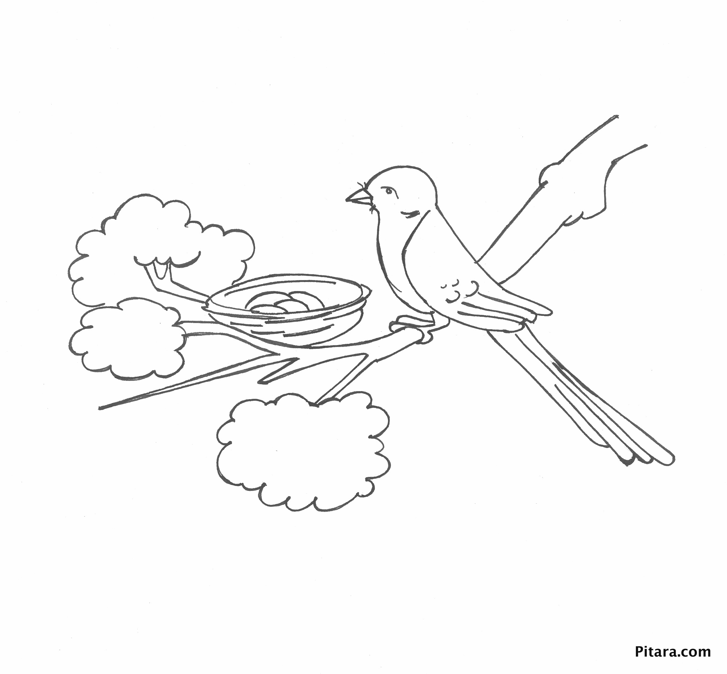 Bird in the nest – Coloring page