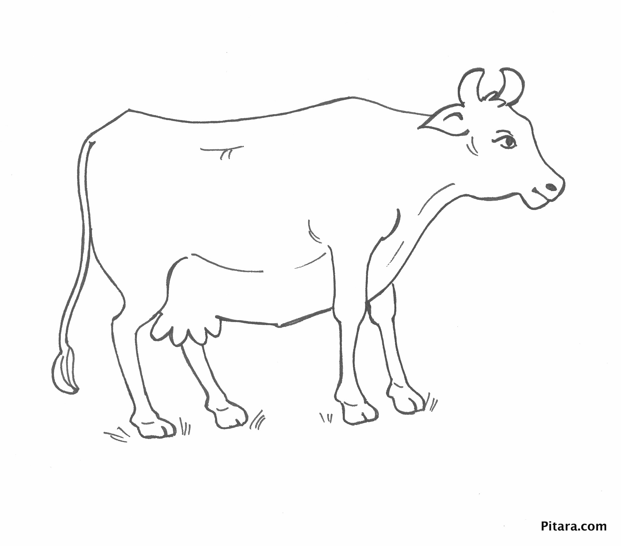 Cow – Coloring page