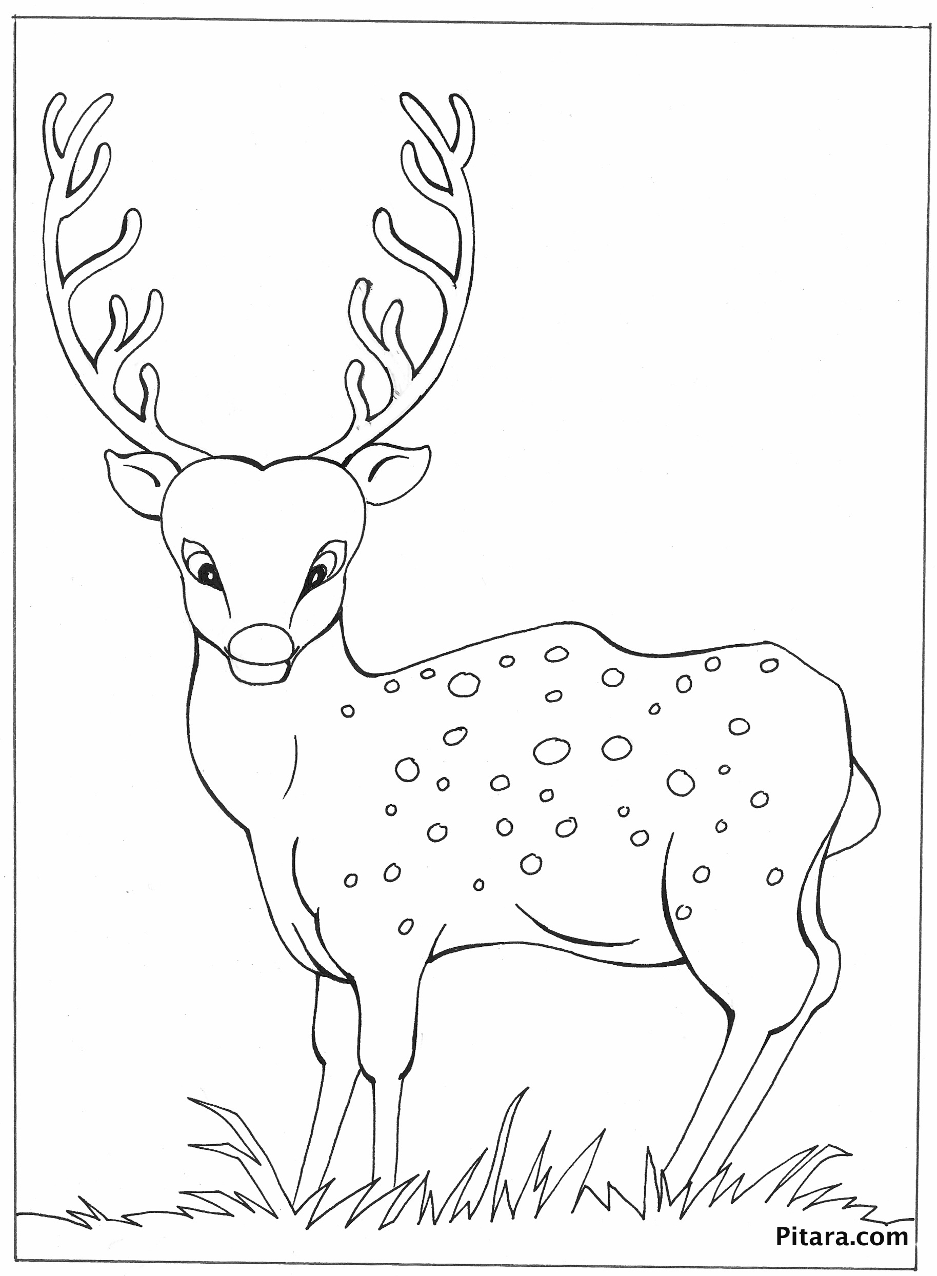 Deer – Coloring page