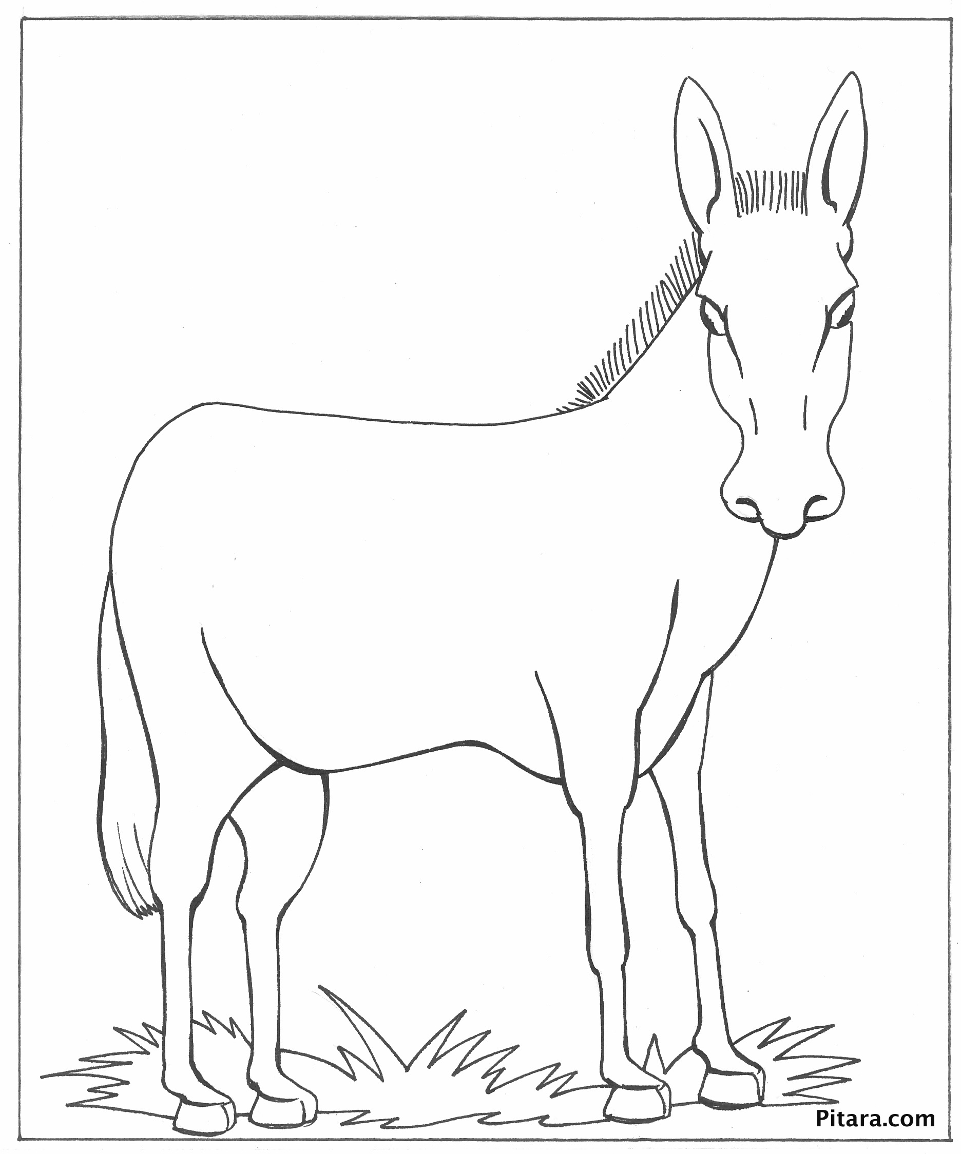 Donkey – Coloring page