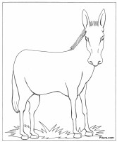 Donkey – Coloring page – Pitara Kids Network