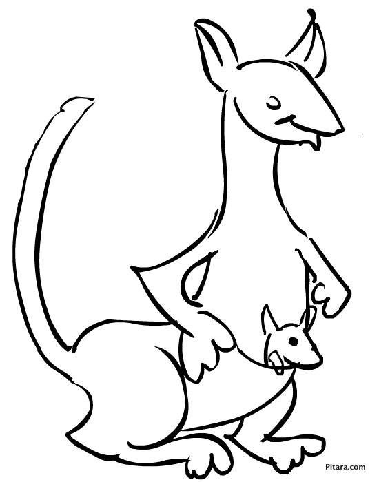 Kangaroo & joey – Coloring page