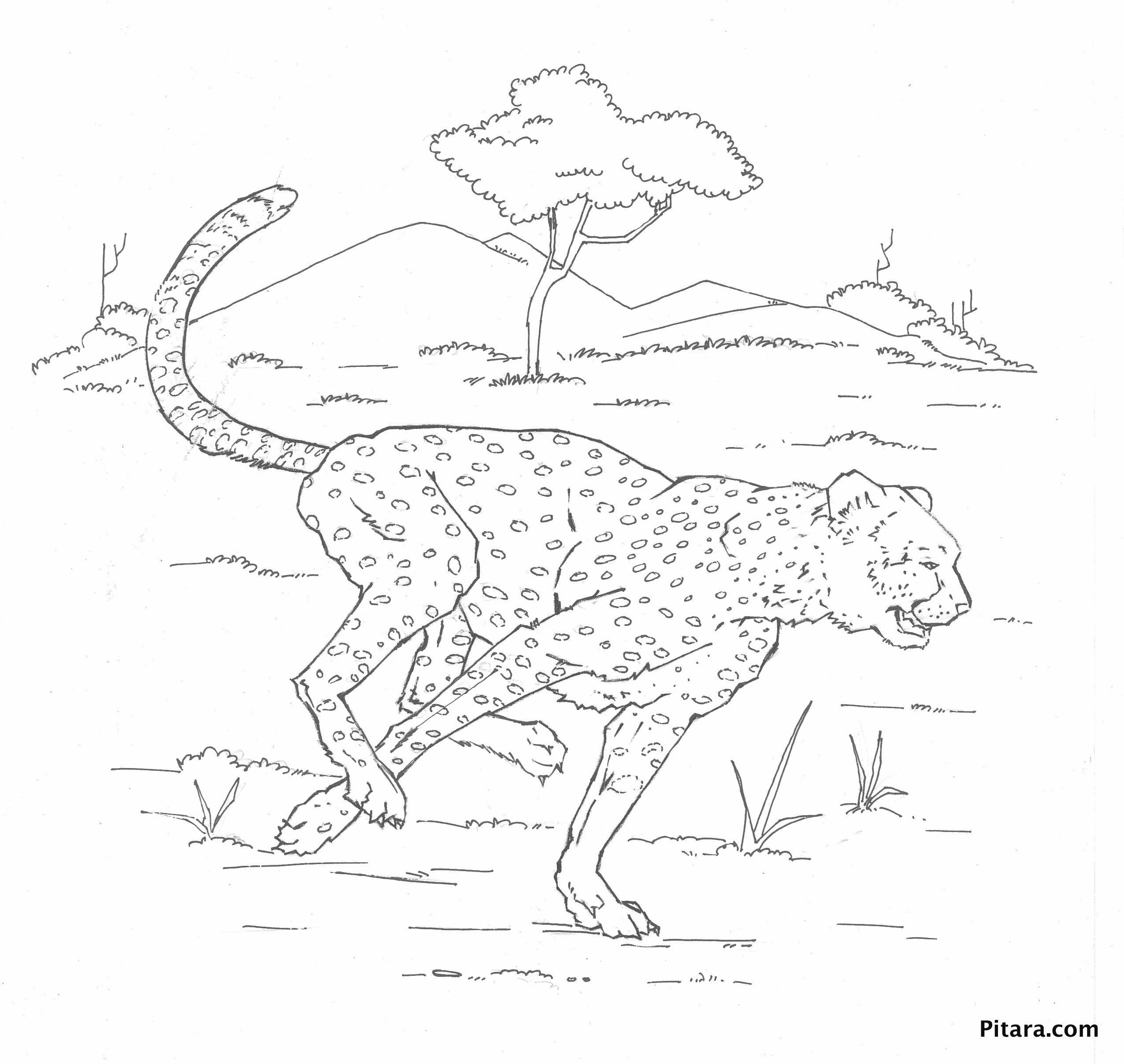 Leopard – Coloring page