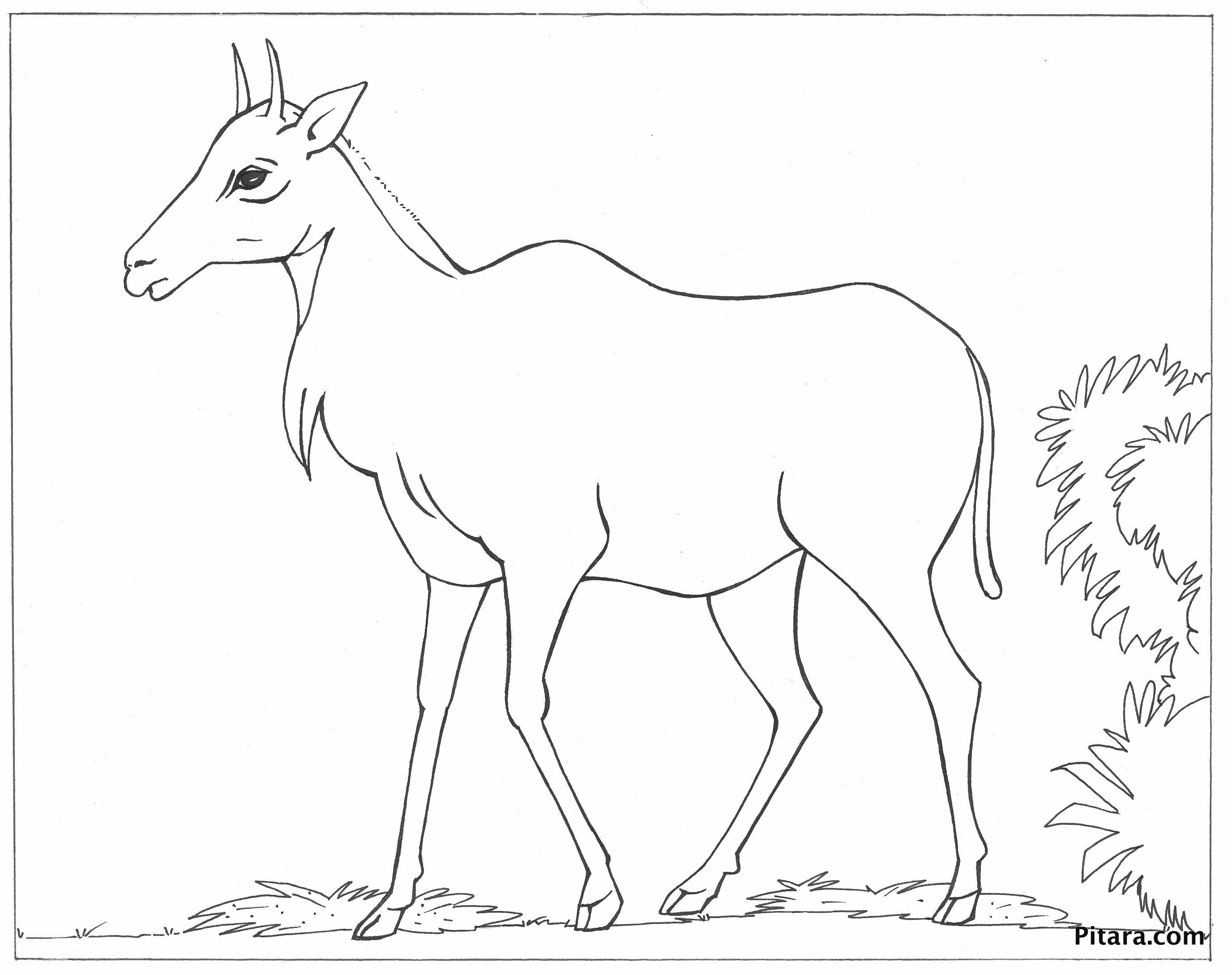 Nilgai (Asian antelope) – Coloring page