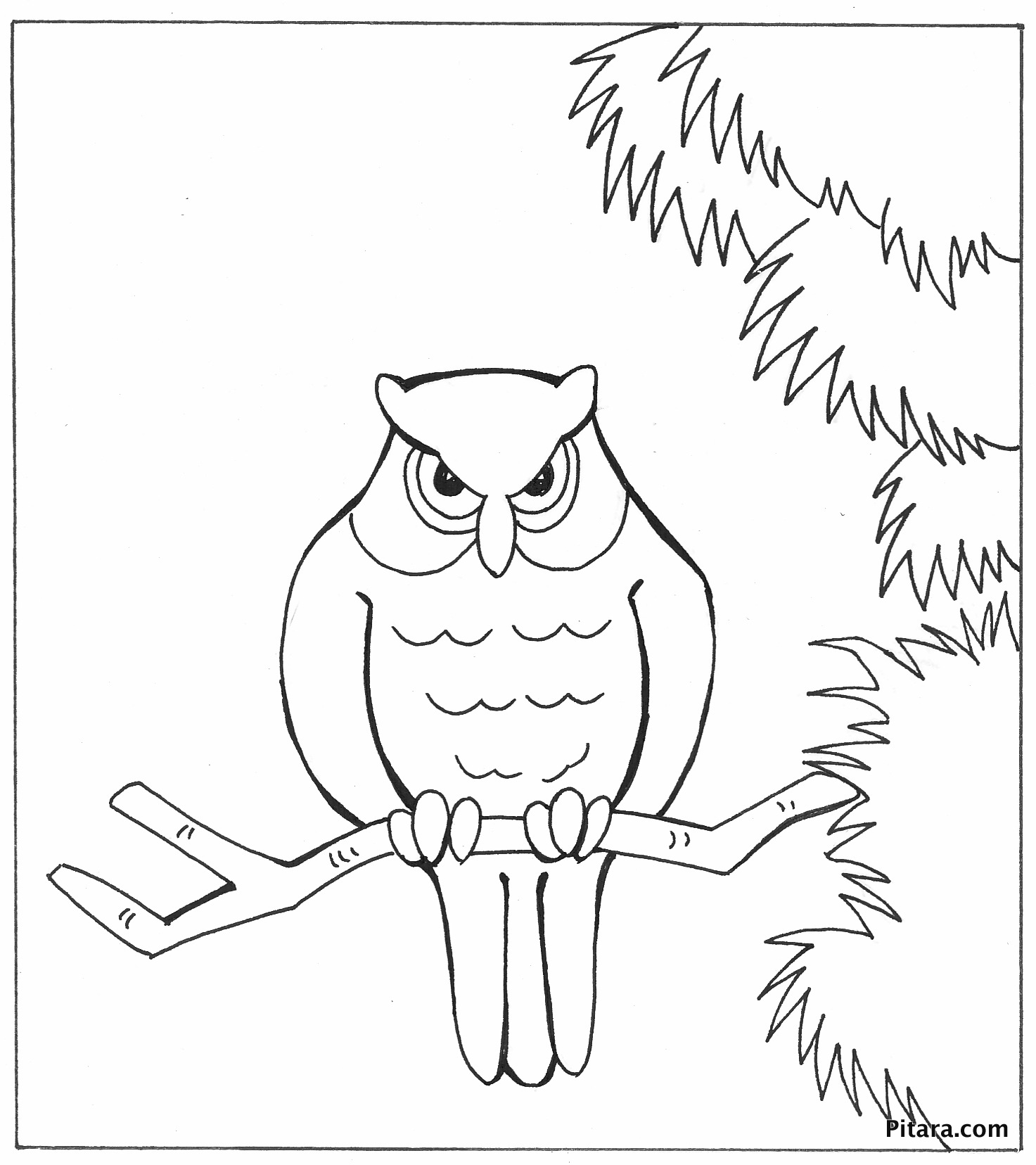Owl – Coloring page