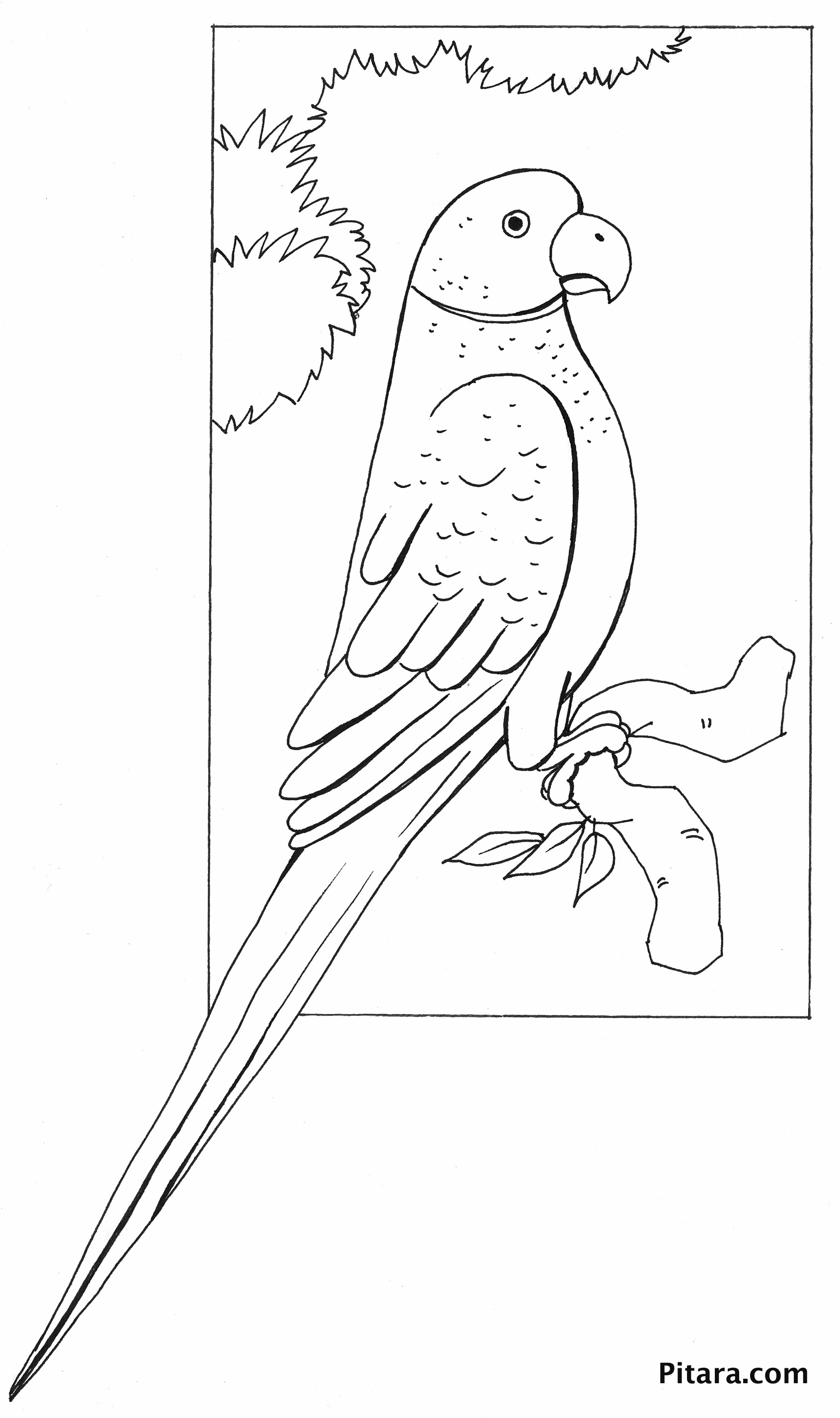 Parrot – Coloring page