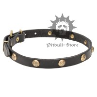 Pretty Dog Collar | Cute Dog Collar - 25.60