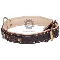 Padded Dog Collar | Designer Dog Collar - 56.20