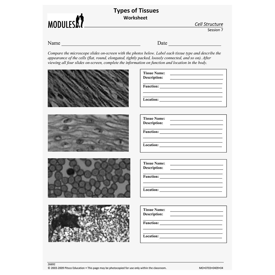 Types Of Tissues Worksheet W