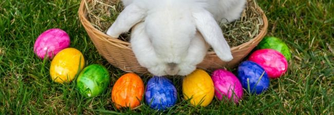 10 Ways You Know You Celebrated Easter in Pittsburgh