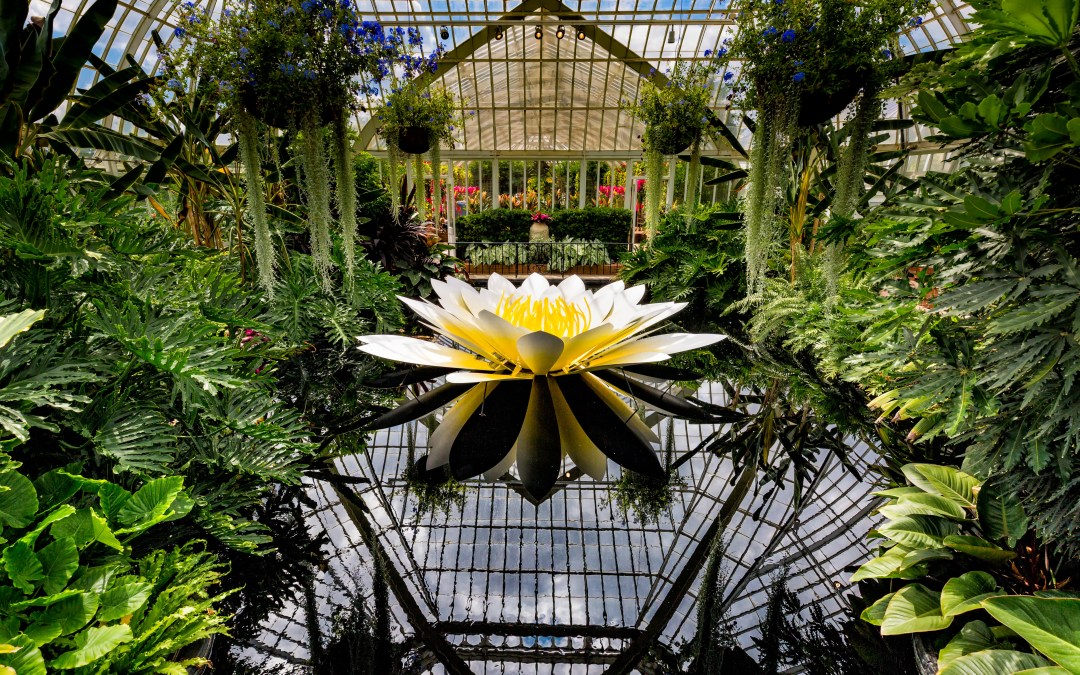 Phipps Conservatory Brings Brilliance with Glass Art