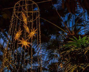 starry phipps magic