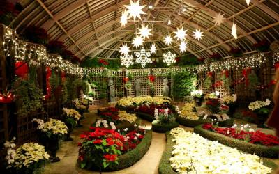 Share Your Phipps Holiday Magic Moments