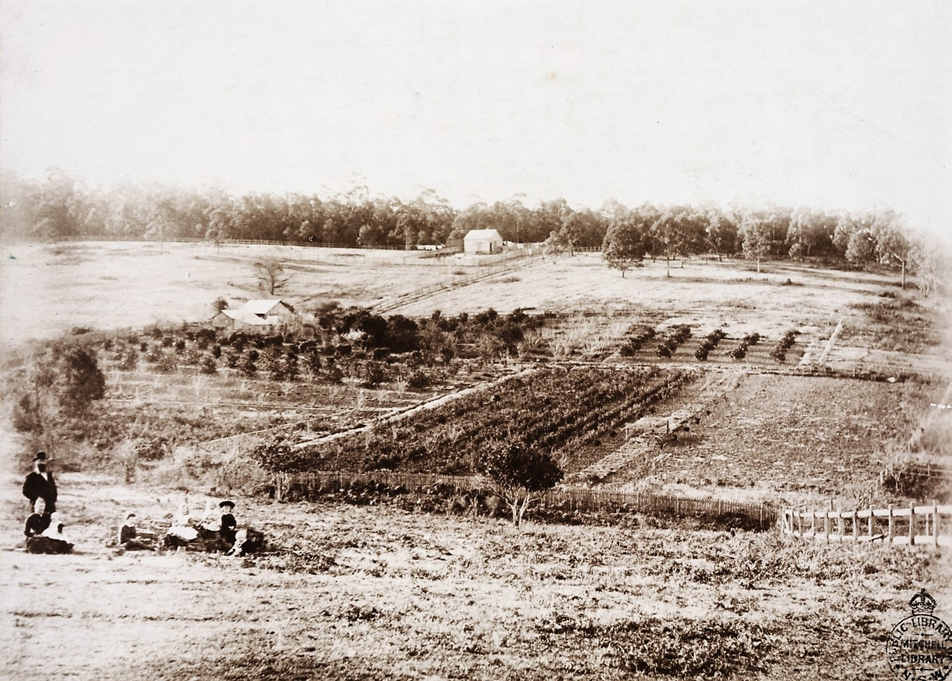 taken from site of present station to east pymble 1887 showing residence of mr cb bradford in the distance orchard nursery of mr e a mcintosh  [ 1365 x 977 Pixel ]