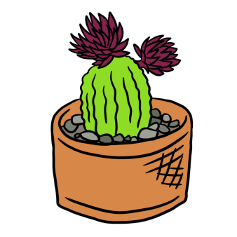 planted succulents illustration