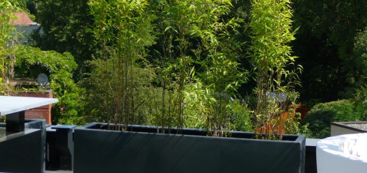 Bac Pour Bambou Terrasse Bac A Fleur Brise Vue Plantes