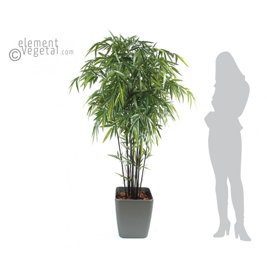 Bambou noir en pot  pivoine etc