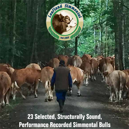 Leafland Simmental - 24 May 2017