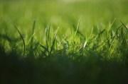 Einen Rasen anlegen - was muss man wissen?