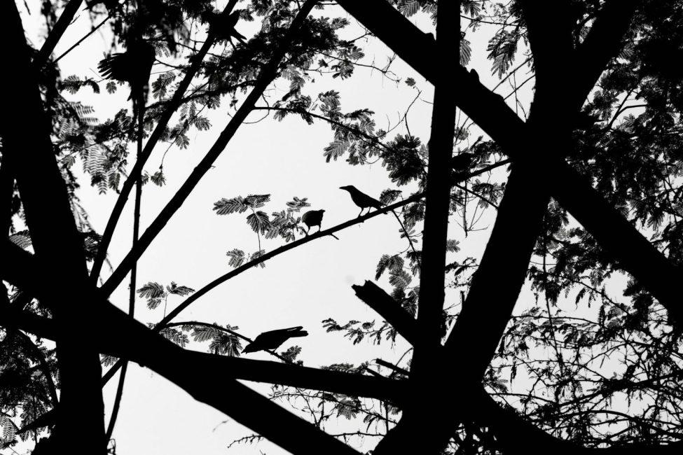 A Visit to Okhla Bird Sanctuary in Delhi
