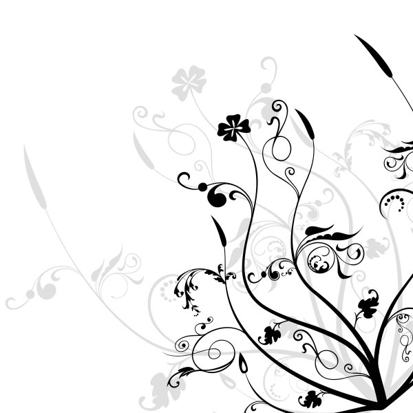 black and white flowers wallpapers