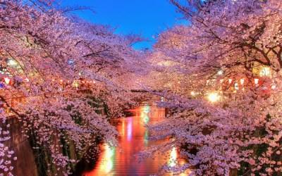 Spring in Japan Wallpapers HD free download   PixelsTalk.Net