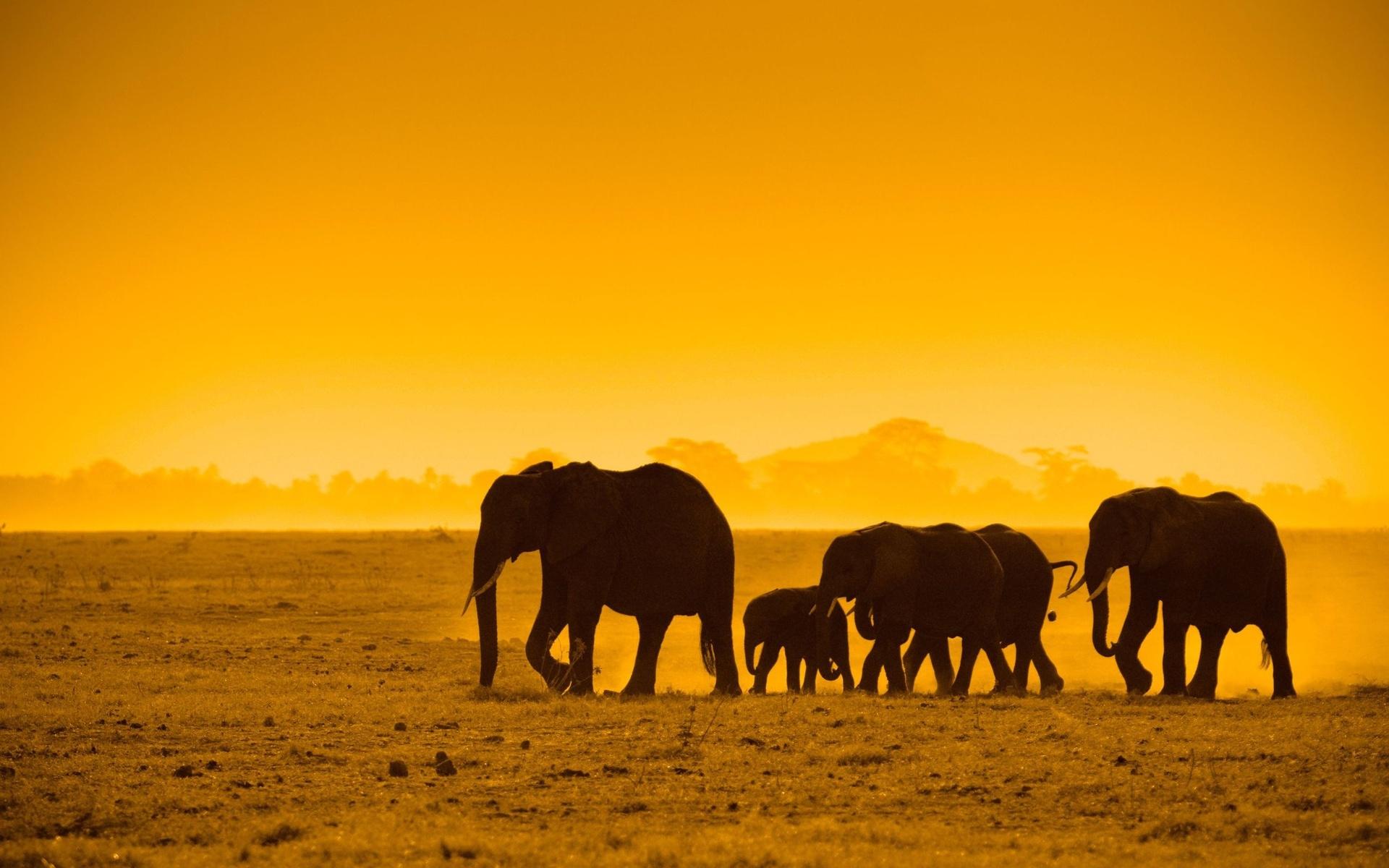 african animals wallpaper hd