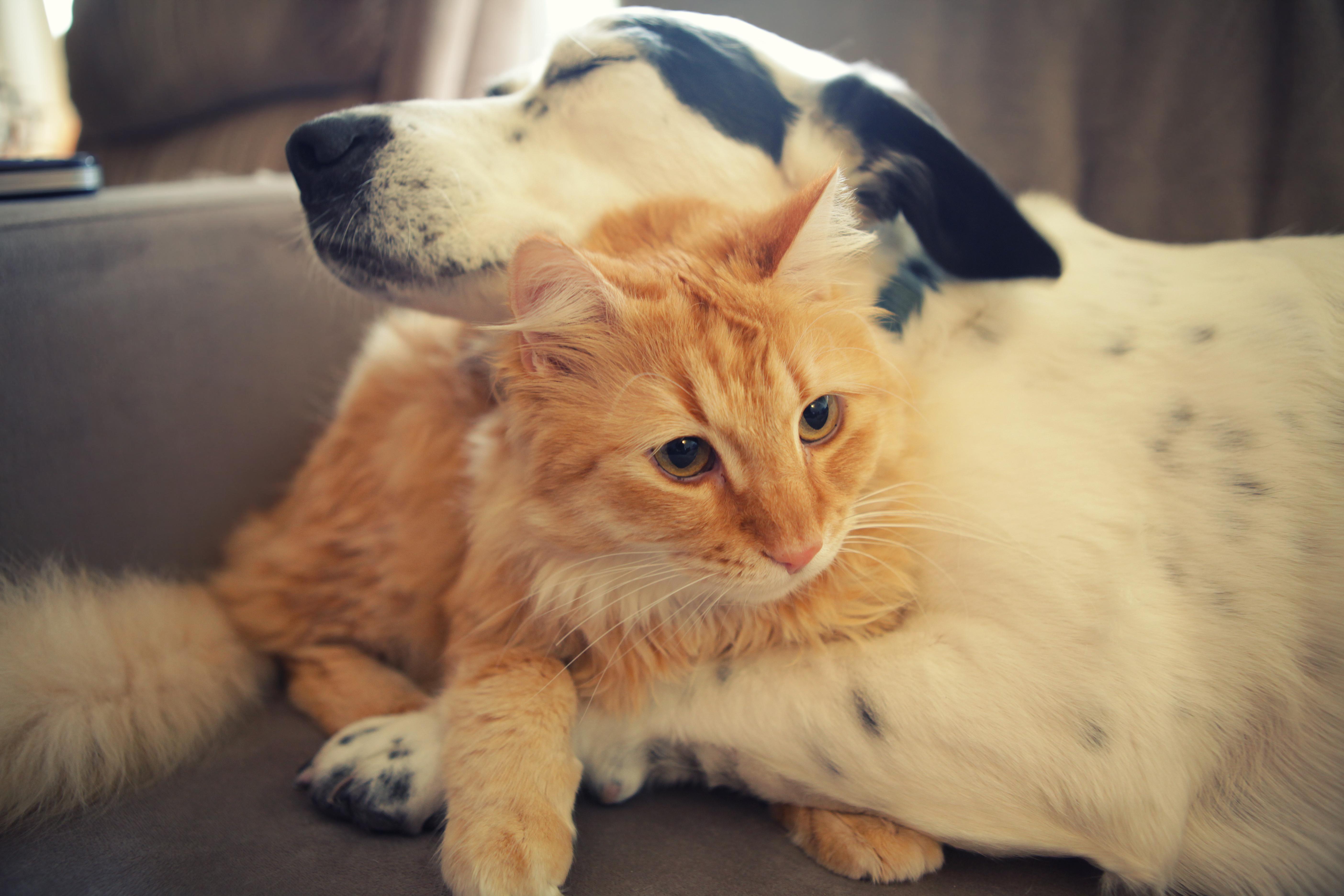 Cute Dog And Cat Wallpaper