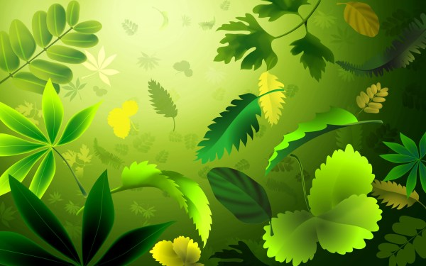 Green Leaves Wallpapers