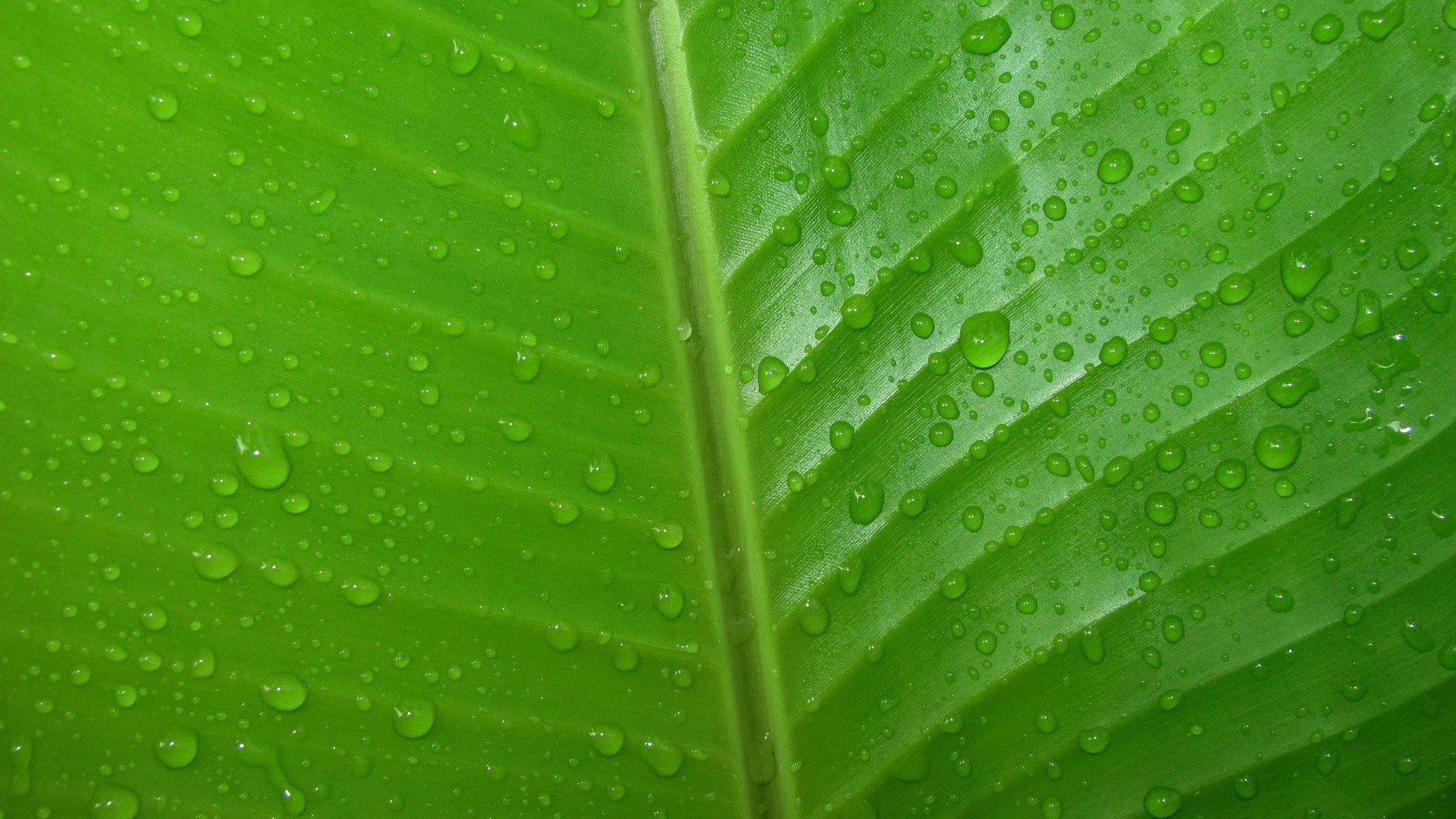 3d Leaves And Water Drop Wallpaper Green Leaves Wallpapers Pixelstalk Net