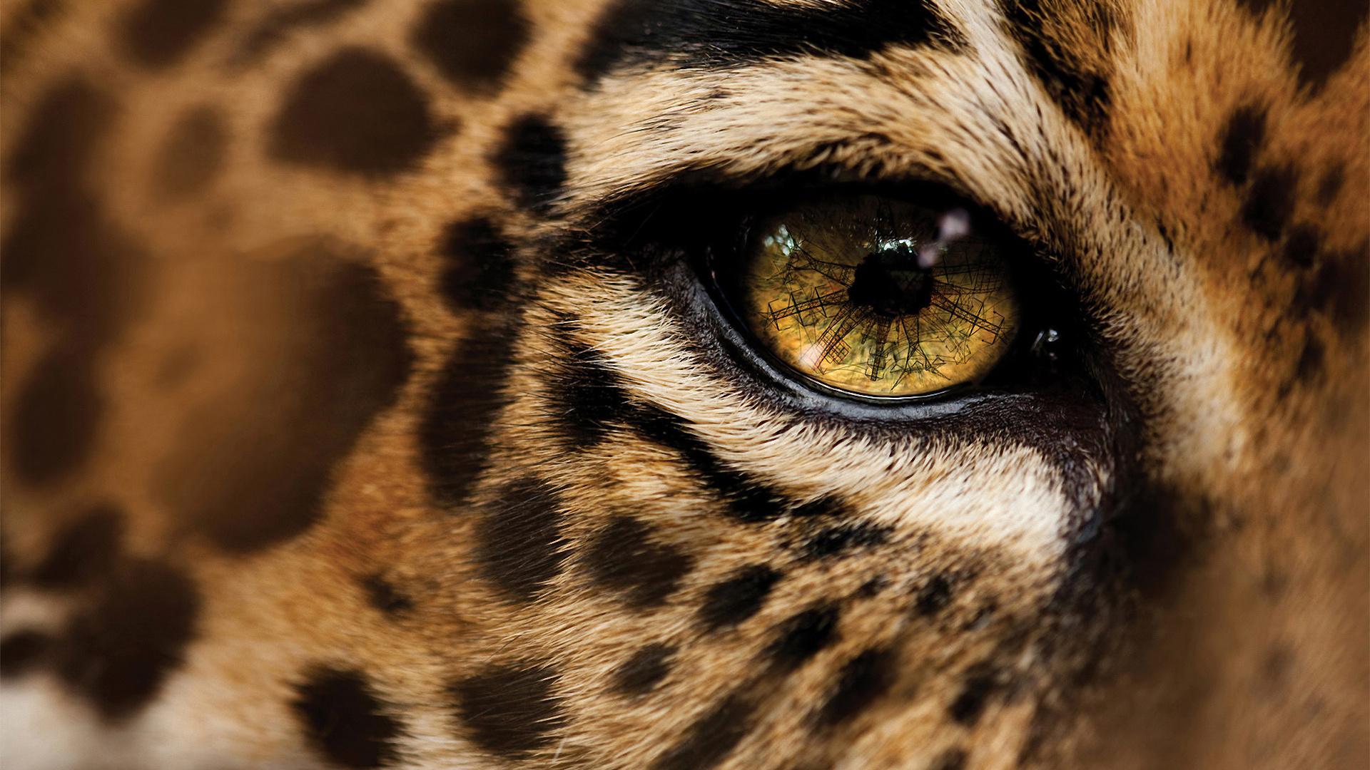 Cute Cheetah Wallpapers Cheetah Wallpapers Hd Pixelstalk Net