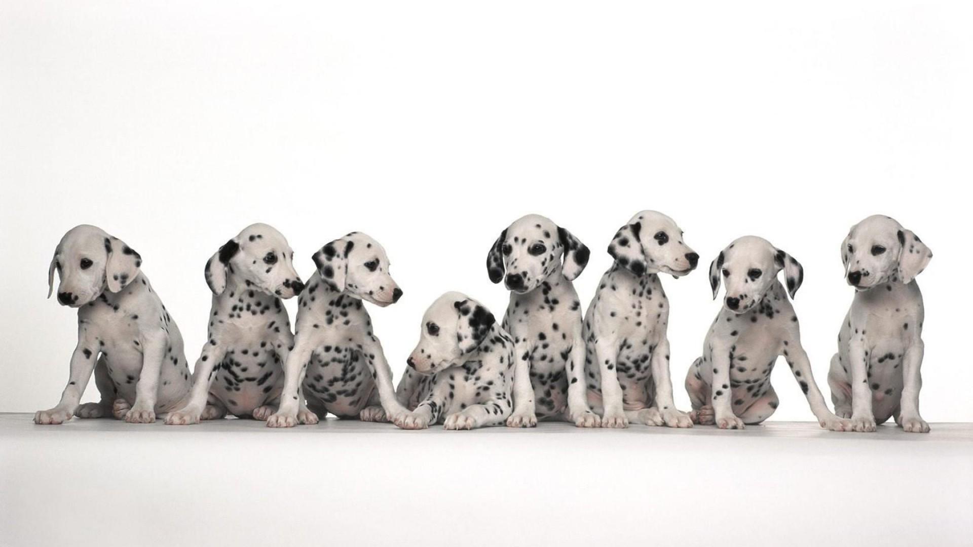 Pitbulls Fall Wallpaper Dog Backgrounds Free Download Pixelstalk Net