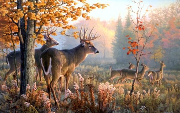 Free Deer Backgrounds