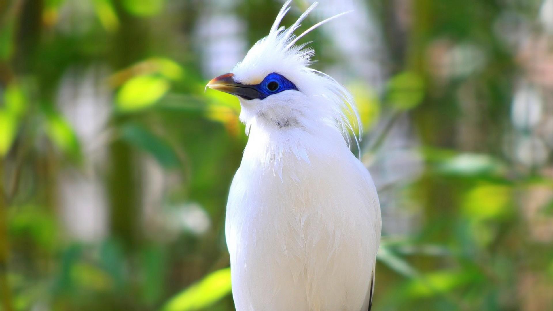 Birds Backgrounds Free Download Pixelstalk Net