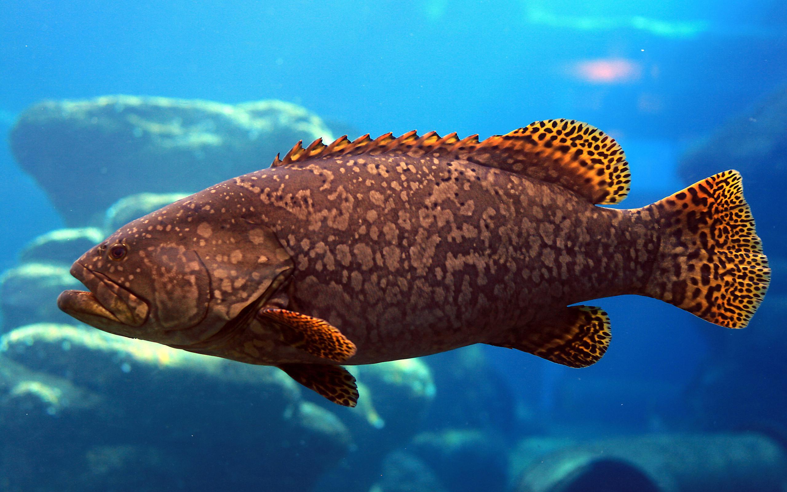 Titanic 3d Pro Live Wallpaper Free Download Ocean Fish Wallpaper Hd Pixelstalk Net
