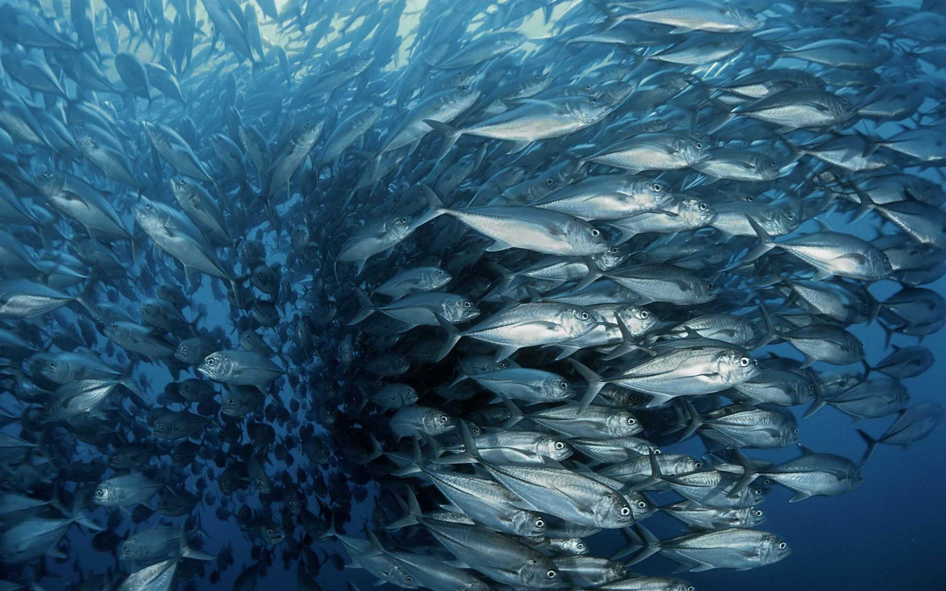 Beautiful Quotes Wallpapers For Whatsapp Ocean Backgrounds Free Download Pixelstalk Net