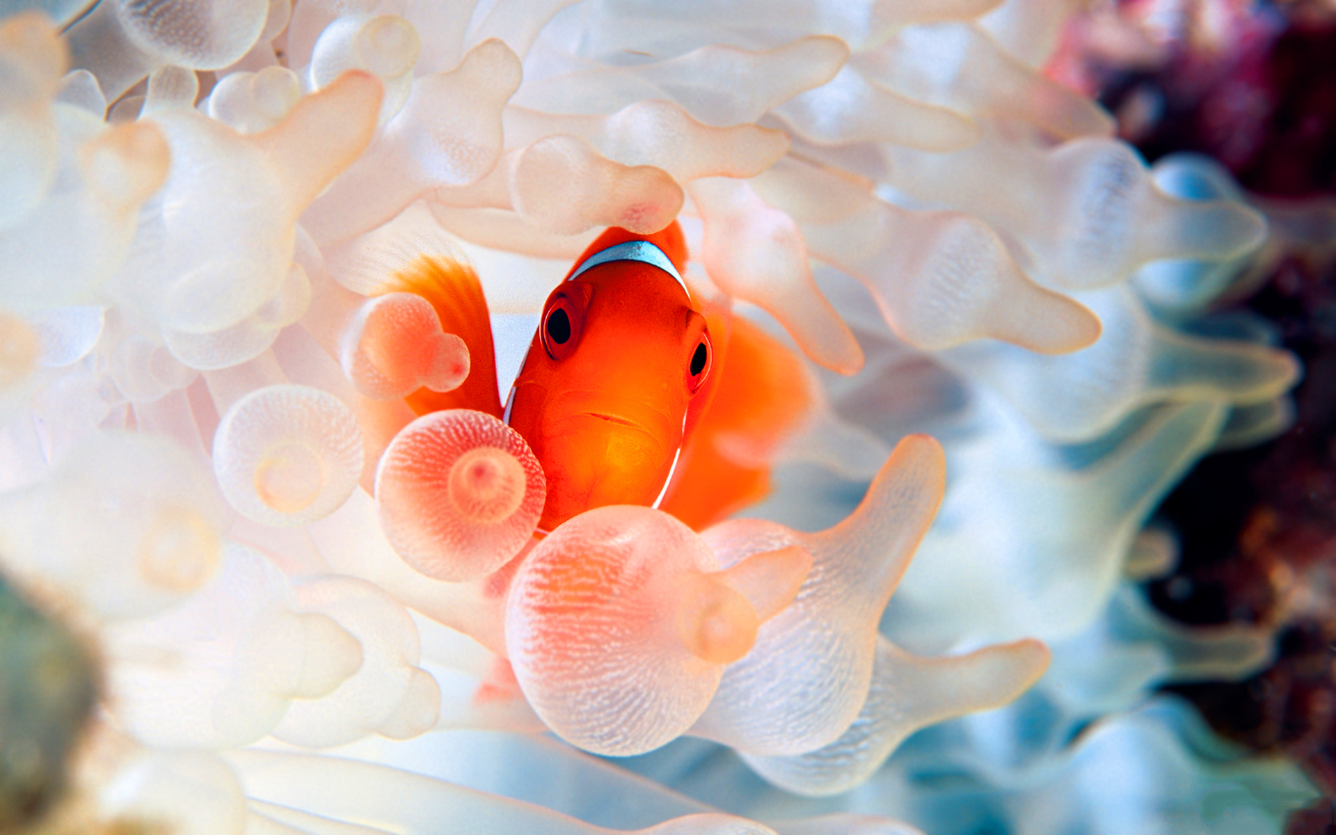 Cute Flamingo Wallpapers Clown Fish Wallpapers Pixelstalk Net