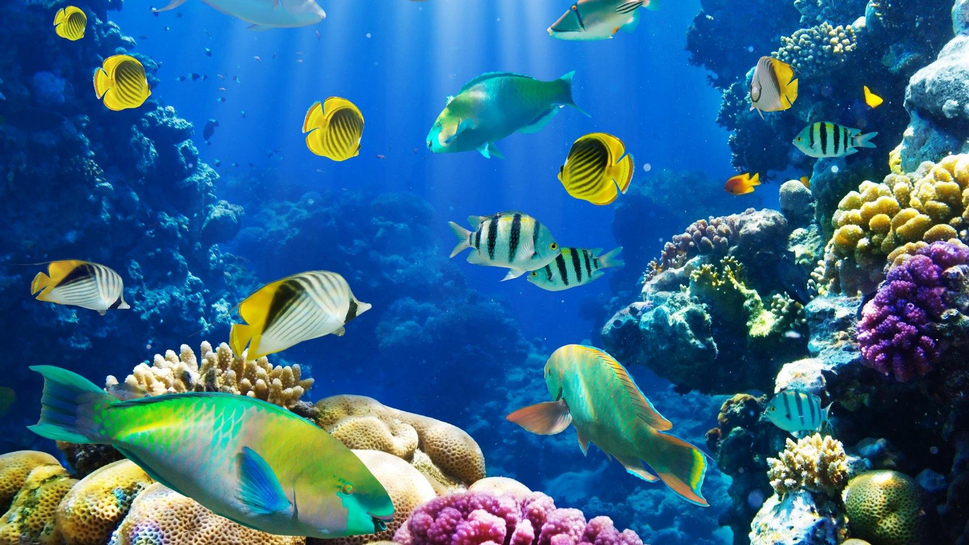 Fish Tank 3d Wallpaper Download Ocean Fish Wallpaper Hd Pixelstalk Net