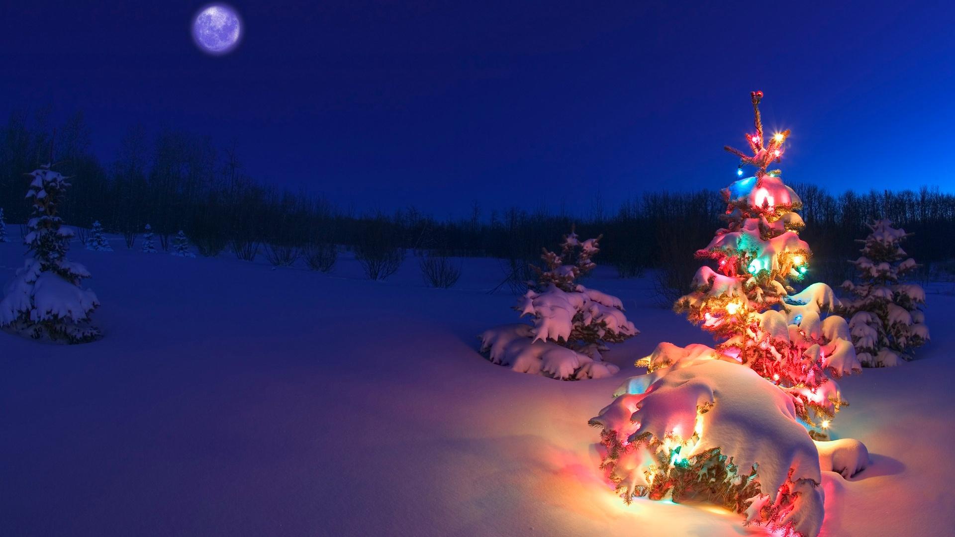 Xmas Tree Hd Wallpaper Hd Christmas Wallpapers Pixelstalk Net
