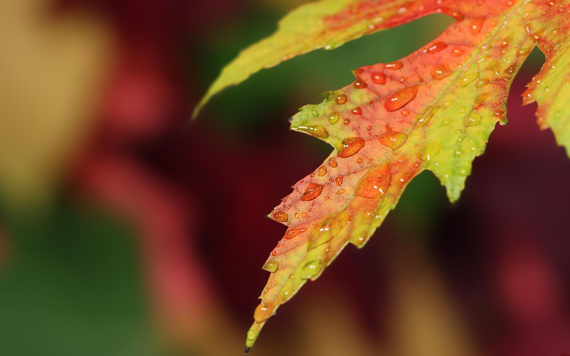 Fall Hd Wallpapers 1080p Widescreen Fall Wallpapers Hd Pixelstalk Net