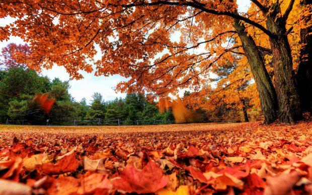 Fall Pumpkin Wallpaper Hd Desktop Fall Wallpapers High Quality Pixelstalk Net