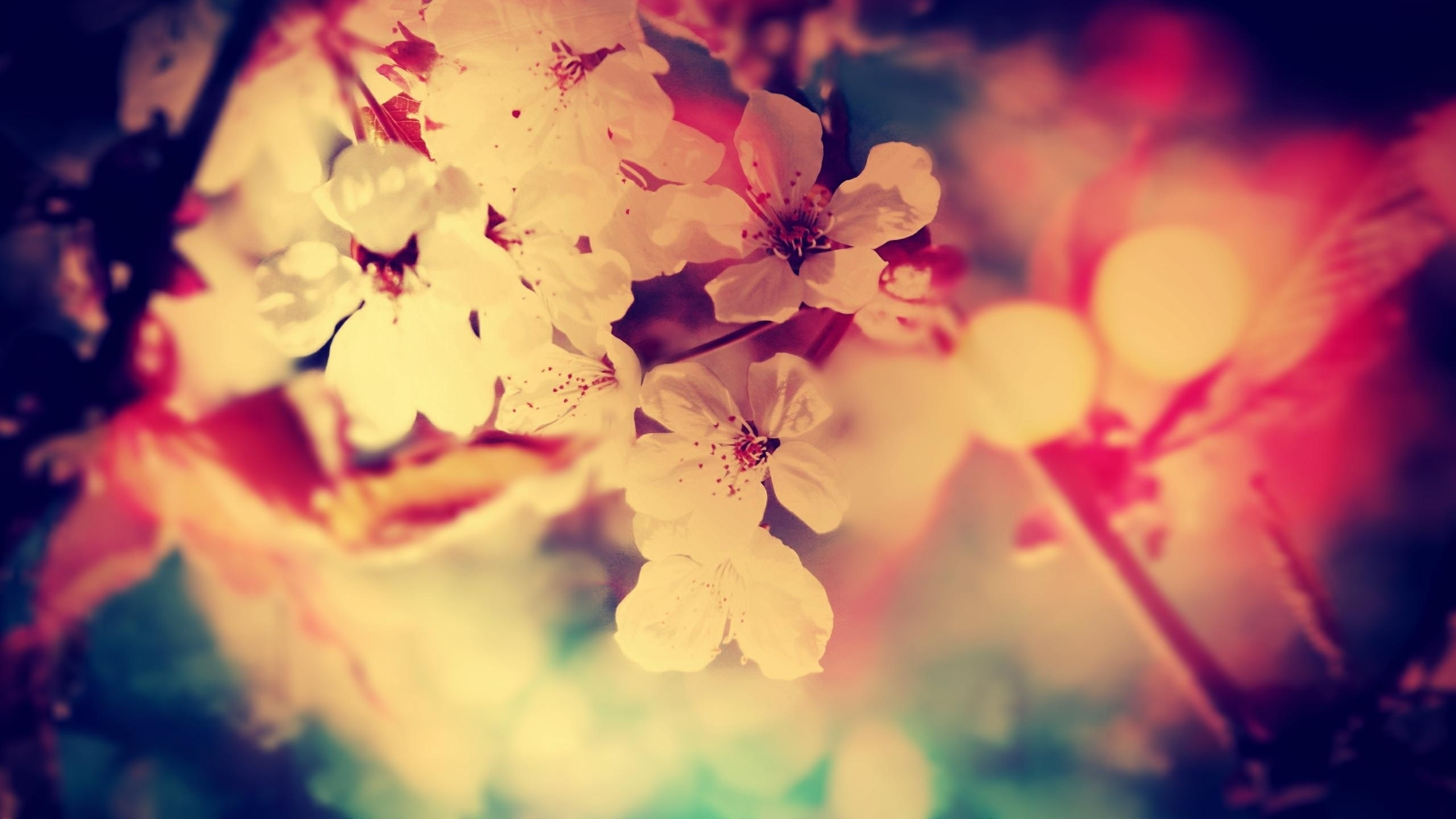 Fall Wallpaper For Desktop Background Cherry Blossom Backgrounds Pixelstalk Net