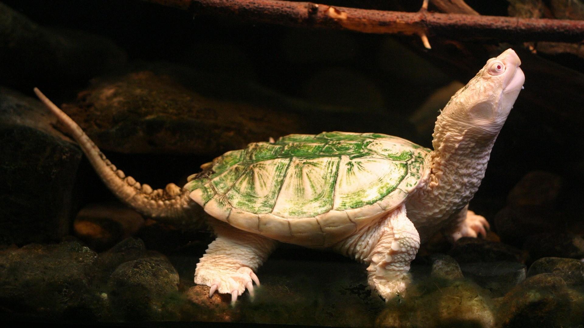 Cute Turtle Wallpaper For Iphone Hd Turtle Wallpapers Pixelstalk Net
