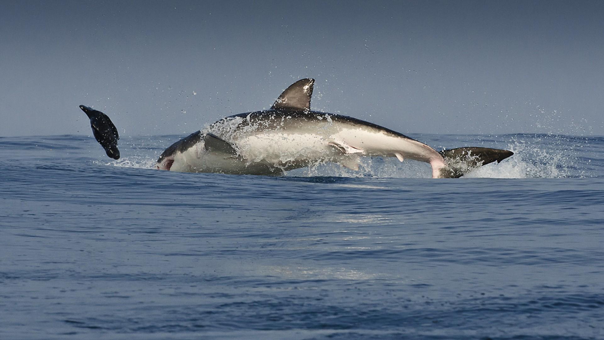 Cute Baby Dolphin Wallpaper Shark Wallpaper Hd Pixelstalk Net