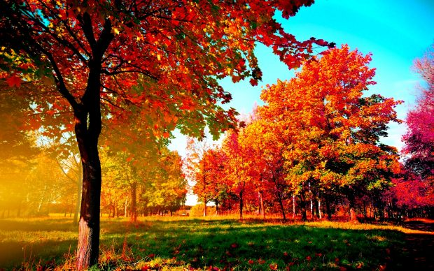 Fall Pumpkin Wallpaper Desktop Fall Wallpapers Hd Pixelstalk Net
