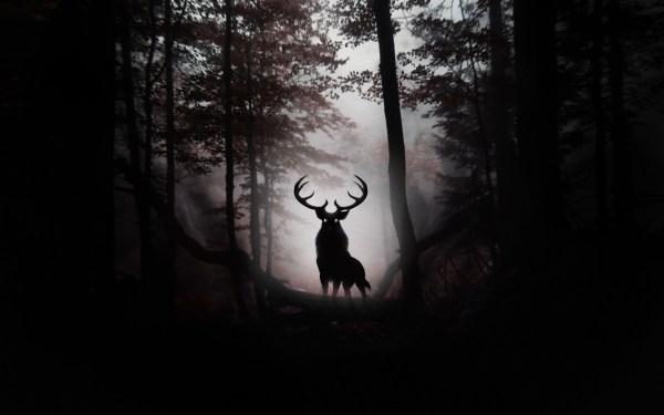 Dark Forest Wolf