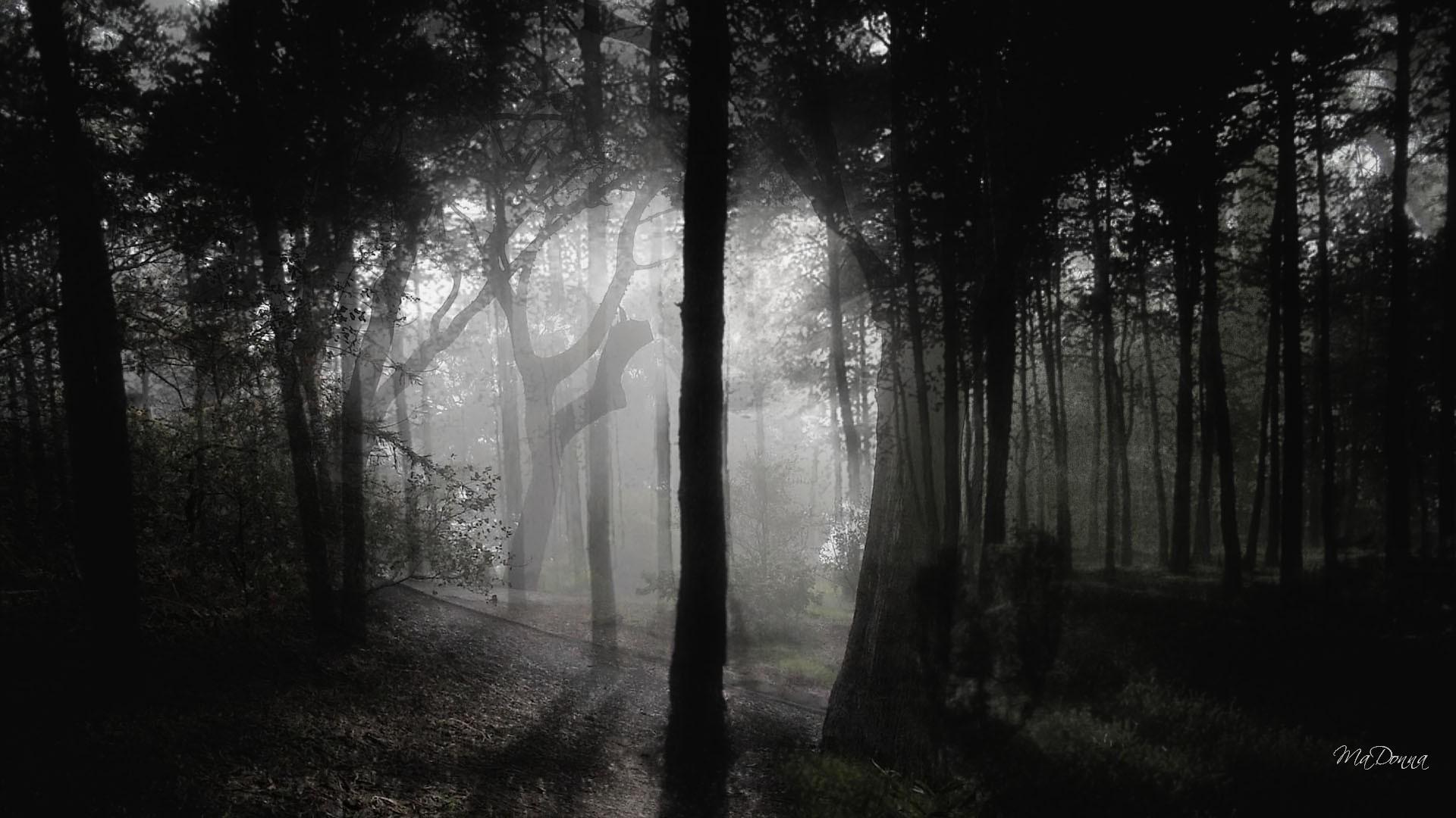 Fall Wallpaper With Deer Download Dark Woods Wallpapers Hd Free Pixelstalk Net