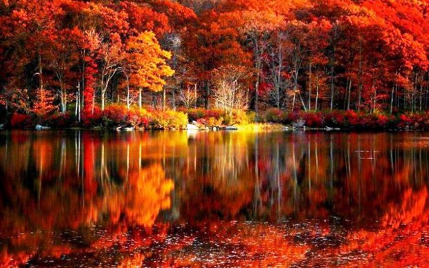 Fall Pumpkin Wallpaper Hd Fall Foliage Wallpapers Hd Pixelstalk Net