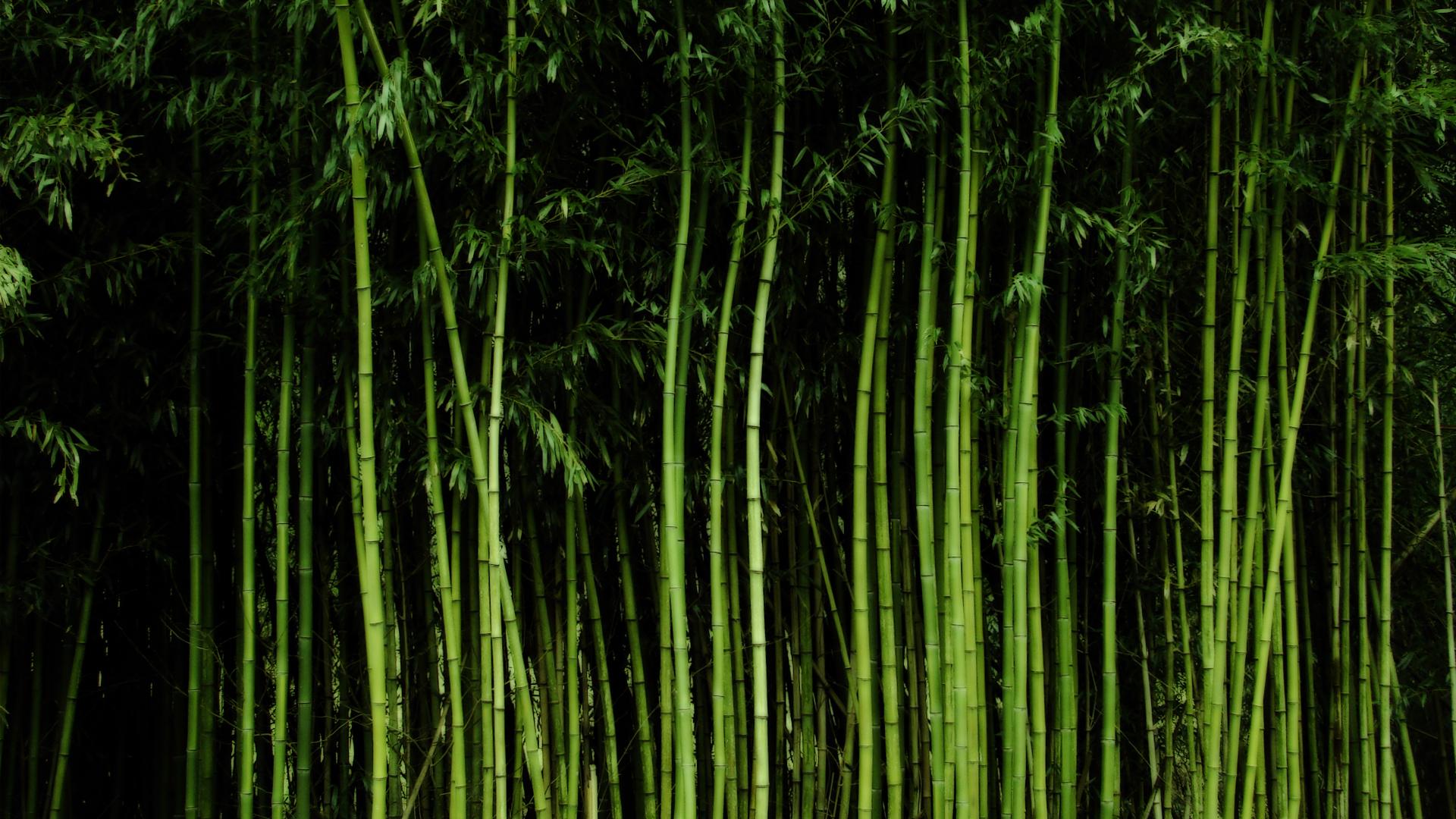 Free Computer Fall Wallpaper Hd Bamboo Backgrounds Download Pixelstalk Net